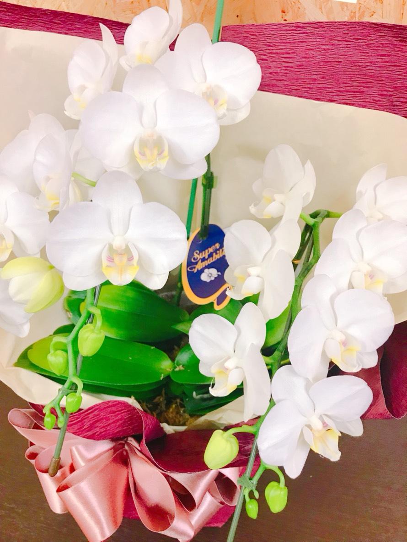 日本オプロさんからお祝いのお花をいただきました!