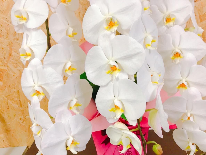 Salesforceさんからお祝いのお花をいただきました!
